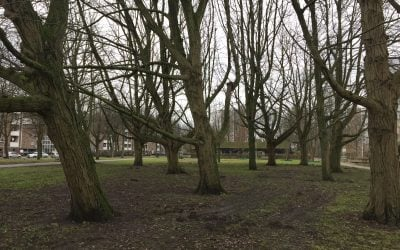 De bomen van het Botteskerkpark
